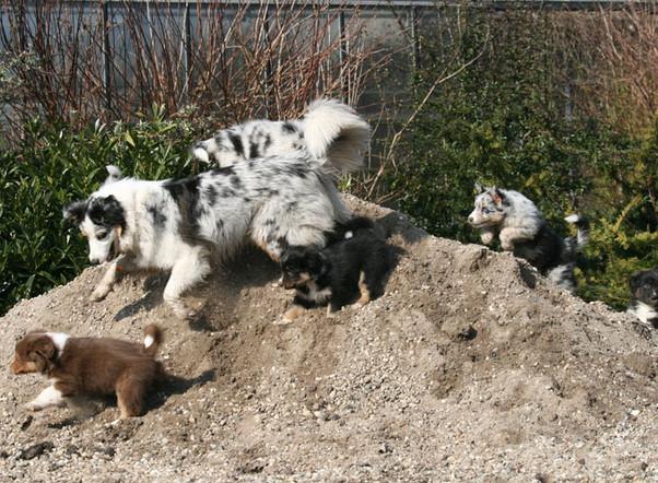 Hunde 3316xs.jpg