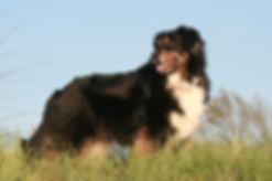 Hunde April 2012 209g.JPG