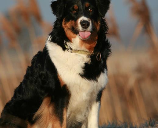 Hunde 3543xs.jpg