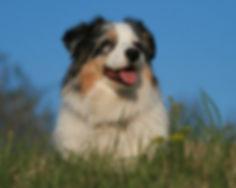 Hunde April 2012 128_edited.jpg