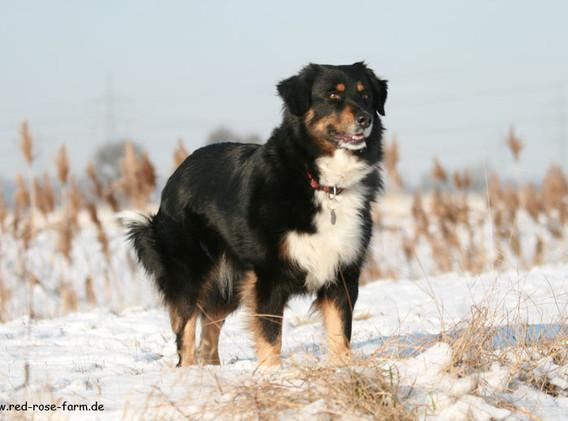 Hunde 4010xs.jpg