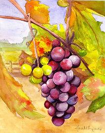 Sonoma Grapes 15.5x12.5.jpeg
