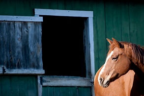 Pictured above is a chestnut horse in front of a green rustic barn.