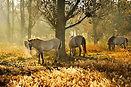 Wildpferde.jpg