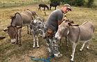 Hobby-Eselpfleger.jpg