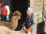 Tierpflegertag Alpaka.jpeg