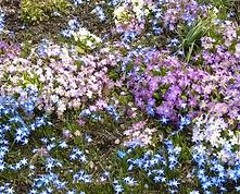 Spring_bot_Garten_II.PNG