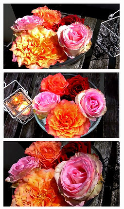 Roses in a beautiful way arranged