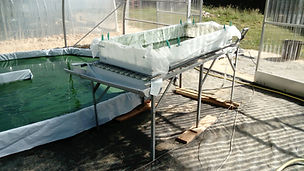 filtration table production spiruline