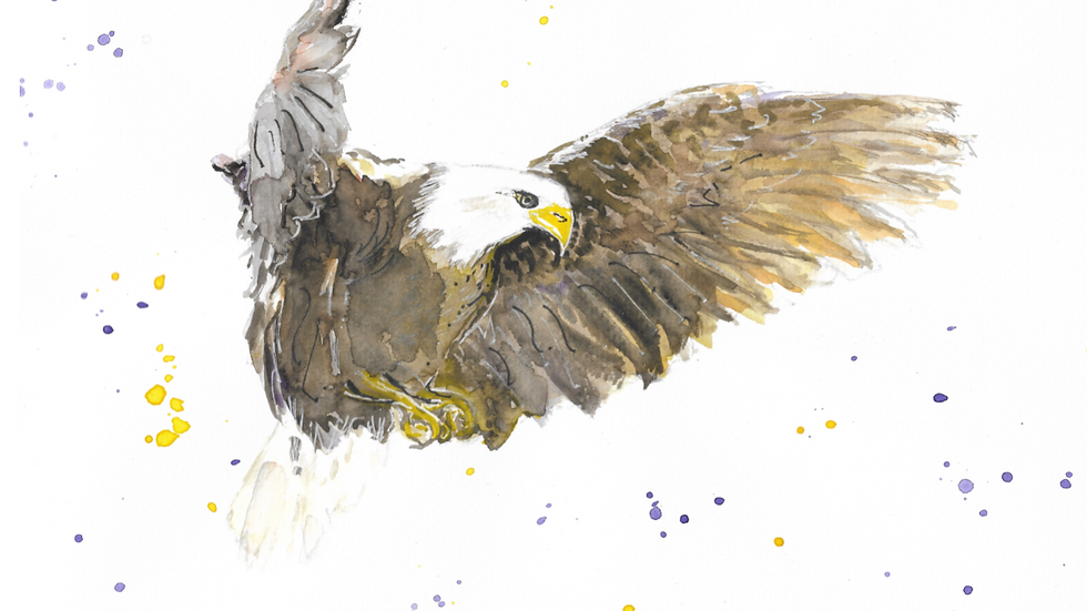 Eagle Focus Print