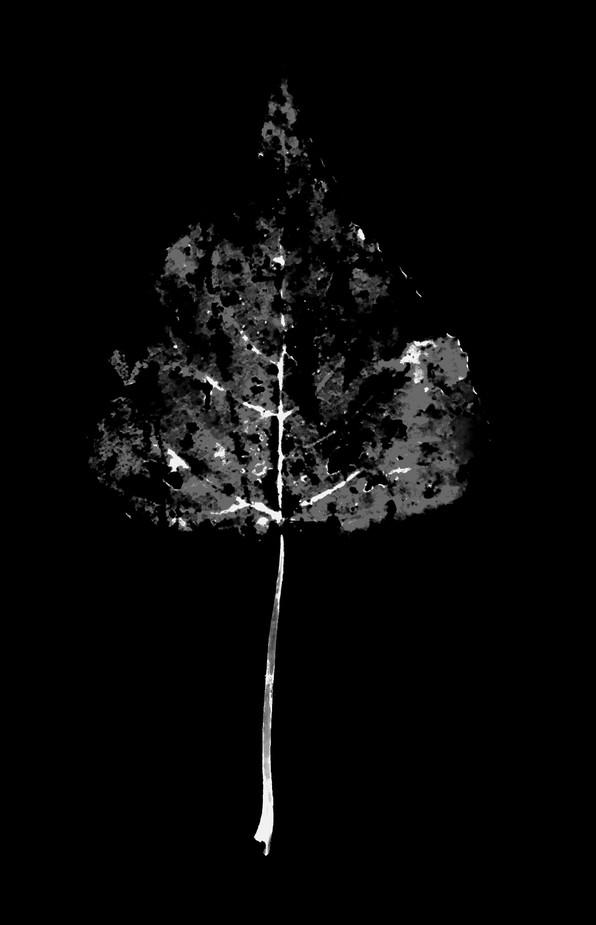 leafwhite2.jpg