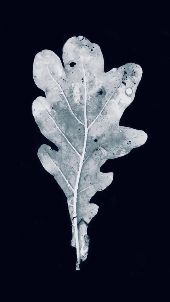 leafwhite1.jpg