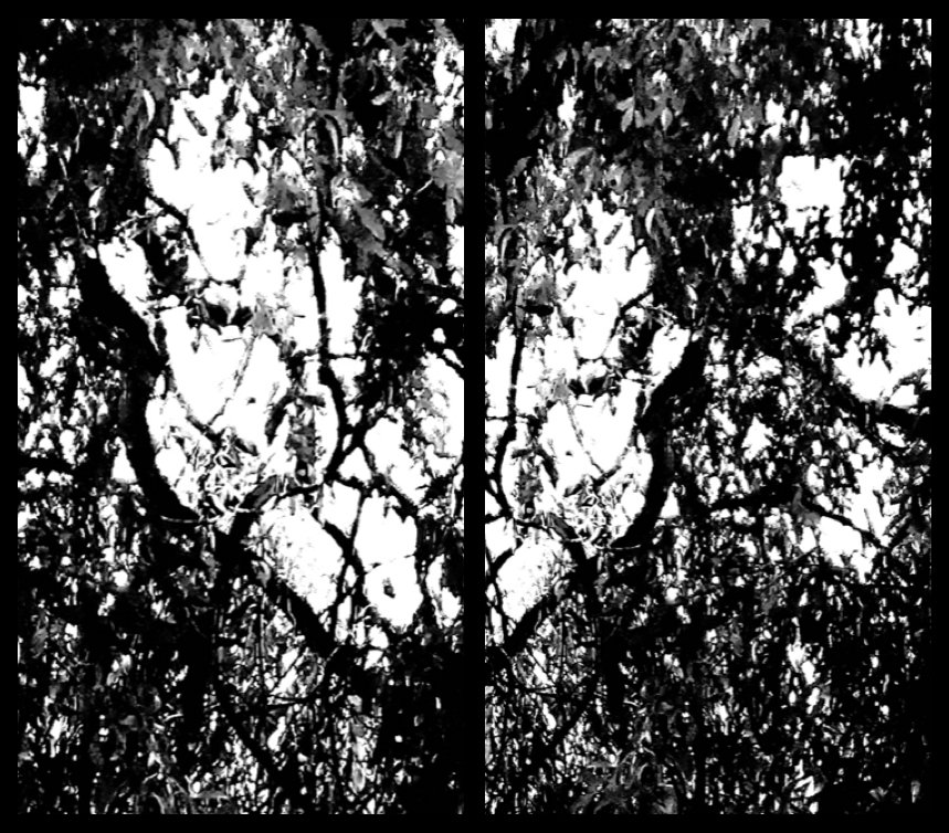 TreeTalk7.png