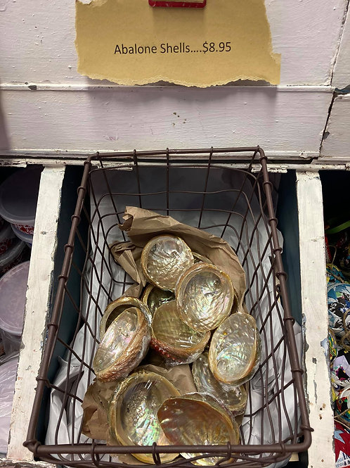 Abalone Shells-small