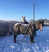 Horses in the snow at Little Dunks Livery Yard
