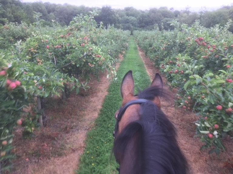 Orchard hack.JPG