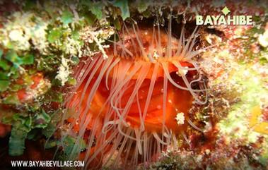 diving-bayahibe-dressel-diving6.jpg
