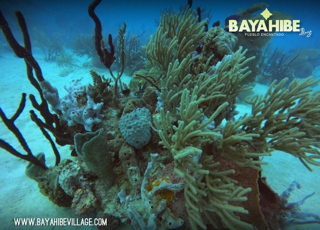 diving-bayahibe-coral-point6.jpg