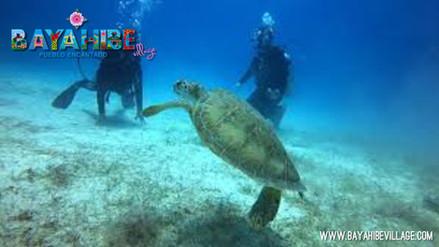 diving-bayahibe8.jpg