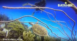 diving-bayahibe-go-dive2.jpg