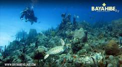 diving-bayahibe-go-dive8.jpg