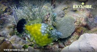 diving-bayahibe-dressel-diving3.jpg