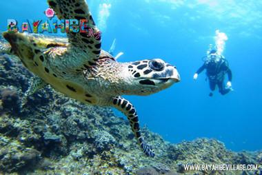 diving-bayahibe9.jpg