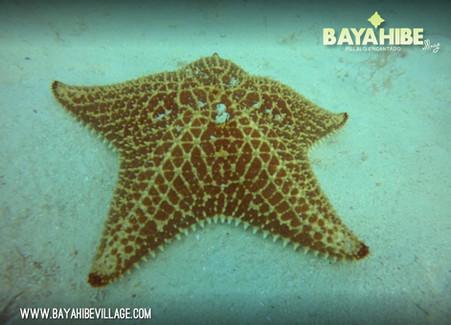diving-bayahibe-coral-point3.jpg