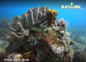diving-bayahibe-scuba-fun2.jpg