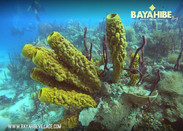 diving-bayahibe-scuba-fun5.jpg