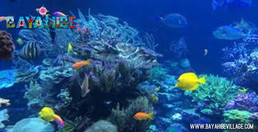 diving-bayahibe6.jpg