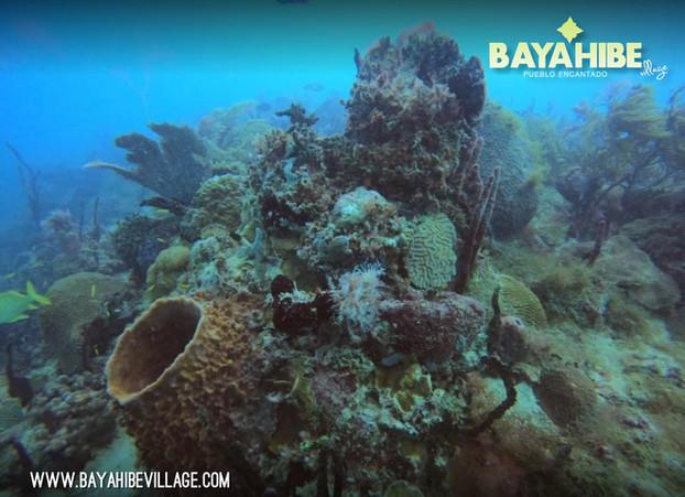 diving-bayahibe-scuba-fun1.jpg