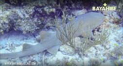 diving-bayahibe-go-dive4.jpg