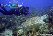 diving-bayahibe10.jpg
