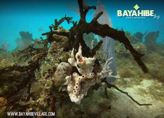 diving-bayahibe-coral-point5.jpg