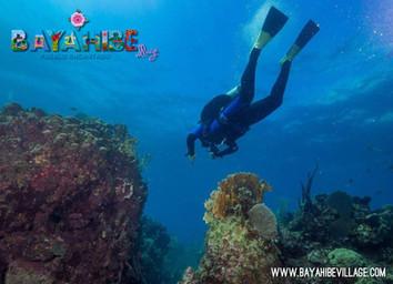 diving-bayahibe1.jpg