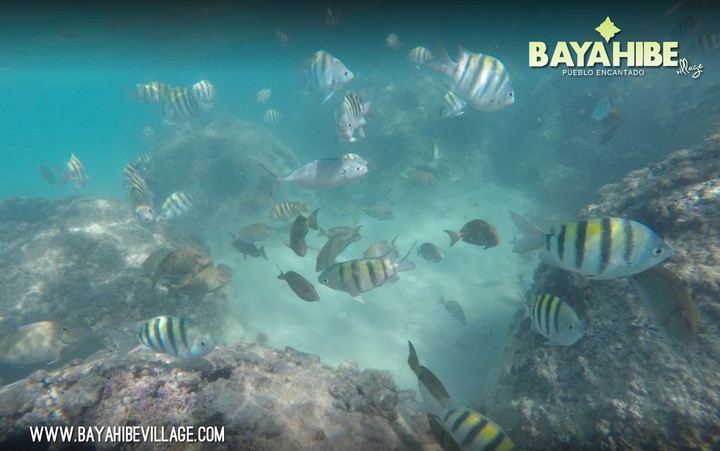 diving-bayahibe-dressel-diving5.jpg