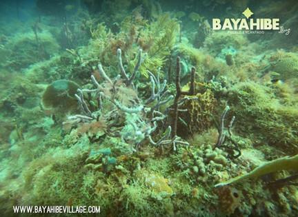 diving-bayahibe-scuba-fun4.jpg