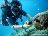 diving-bayahibe3.jpg