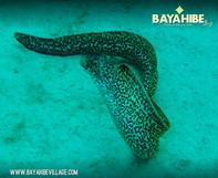 diving-bayahibe-sharkeys-dive3.jpg