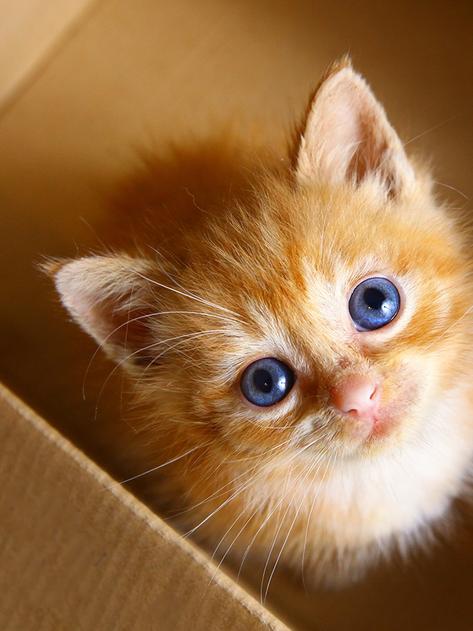 Gatitos en regalo