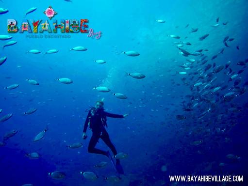 diving-bayahibe2.jpg