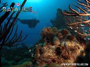 diving-bayahibe5.jpg