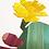 Thumbnail: Opuntia Rafinesquii