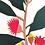 Thumbnail: Eucalyptus Ficifolia