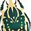 Thumbnail: Mecynorhina Polyphemus