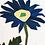 Thumbnail: Anemone Apennina