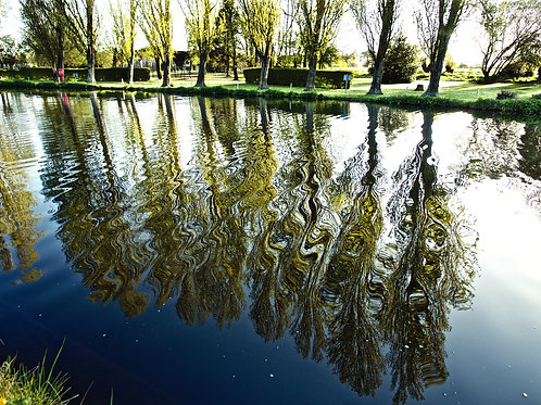 Canvas - Thames Trees