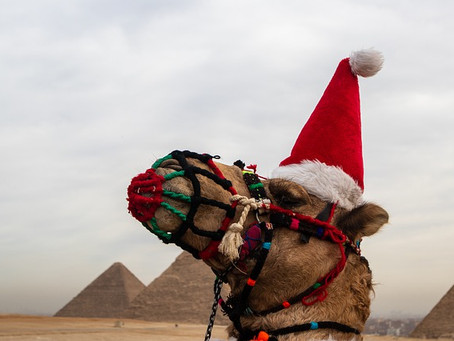 The Haughty Camel