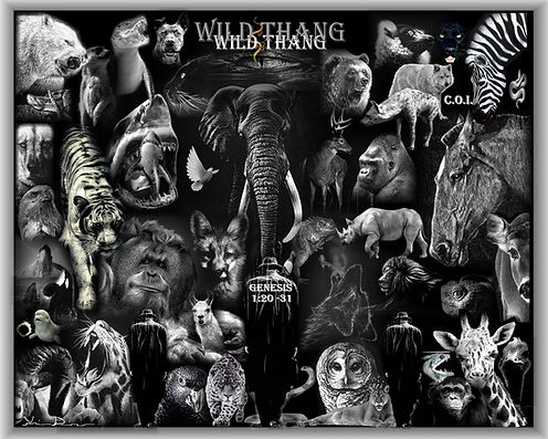 wild 1.jpg